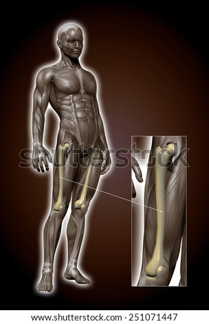 femur - stock photo
