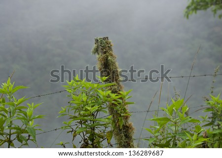 Fence post with barbed wire in Ecuador loud forest, green, grey background - stock photo