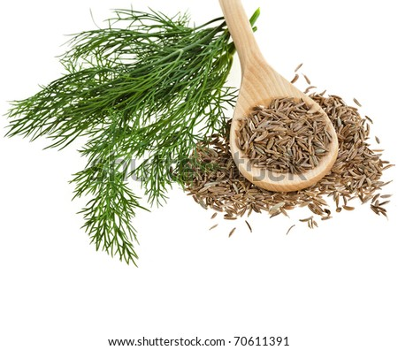 fennel and dill  isolated  over white background - stock photo