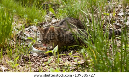 feral cat eating at a feeding station - stock photo