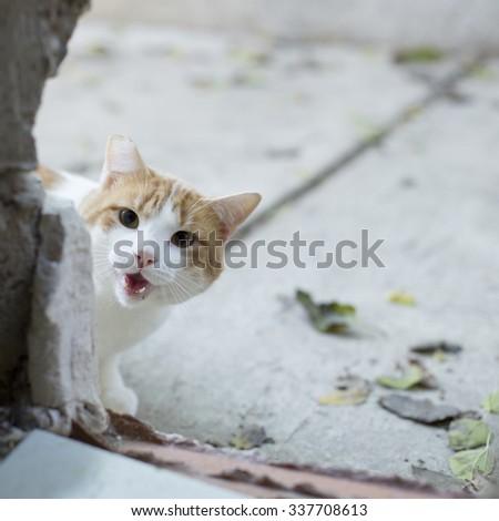 Feral Cat Outside (Shelter) - stock photo
