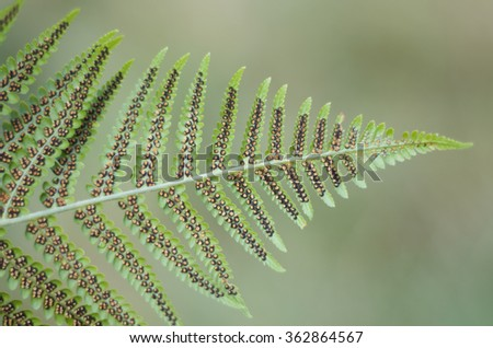 Fern and spore - stock photo