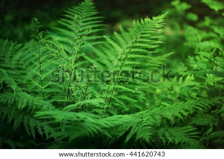 Fern growing in the forest. Selective focus, blurred background - stock photo