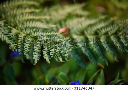 Fern in a mountain forest - stock photo