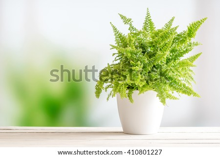 Fern in a white flowerpot on a wooden table - stock photo