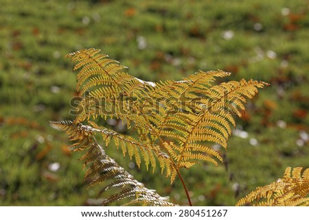 Fern in autumn, Westphalia, Germany, Europe - stock photo