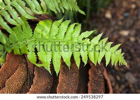 fern leaf in flower pot - stock photo