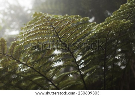 Fern leaf with close-up water drops, cold colored fern leaf. - stock photo