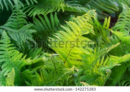 fern leaves background - stock photo