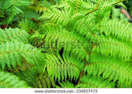 Fern leaves background in the forest - stock photo