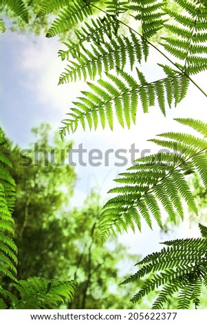 fern leaves in the woodlands, view from bottom up - stock photo
