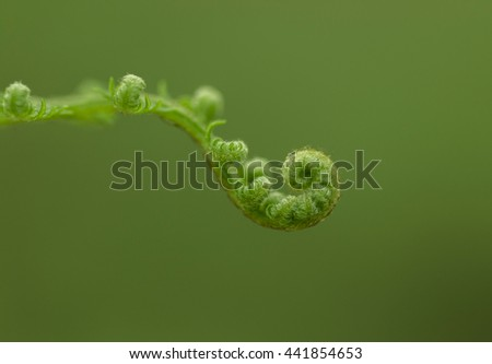 fern spiral - the koru - stock photo