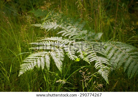 ferns in a shaft of bright sunlight - stock photo