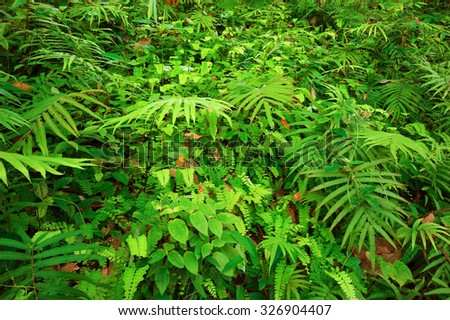 Ferns leaves and other tropical plants create beautiful natural texture background - stock photo