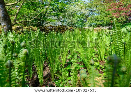 Ferns with intentional out of focus foreground items - stock photo