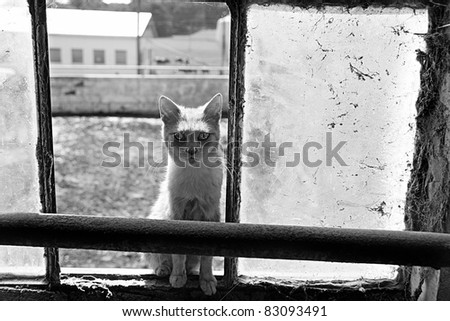Ferrel Cat - stock photo