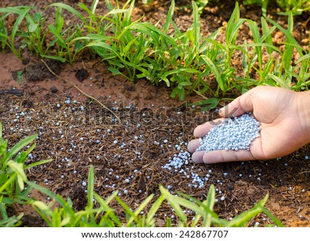 fertilizer,soil,Farmer hand giving chemical fertilizer to young plant - stock photo
