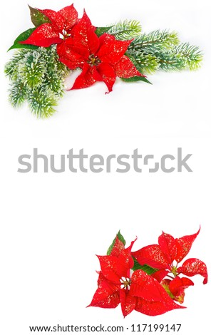 Festive background with christmas flowers red Poinsettia and evergreen tree decoration - stock photo