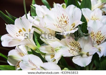 Festive bouquet of beautiful white hibiscus flowers. Big petals and pistil. Beauty in nature. Wedding bouquet. Natural decoration. Closeup scene. Hibiscus stigma. - stock photo