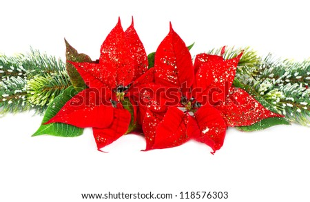 Festive decoration with christmas flower red poinsettia and evergreen tree bunch - stock photo