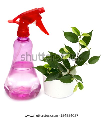Ficus Benjamina flower in pot and  sprinkling can - stock photo