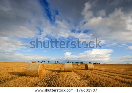 Field after harvest and dramatic sky  - stock photo