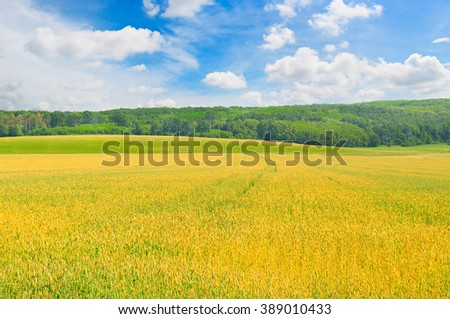 field and blue sky with light clouds - stock photo