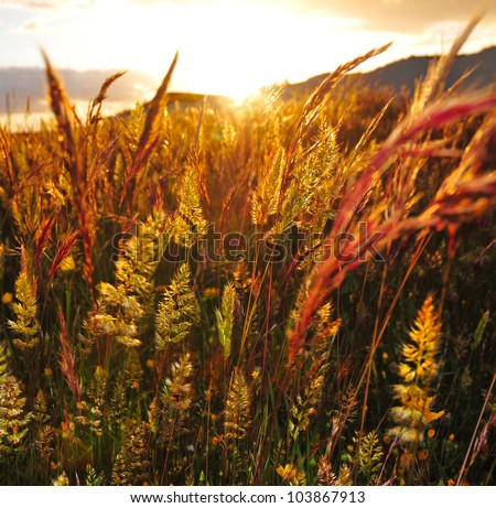 Field at sunset - stock photo