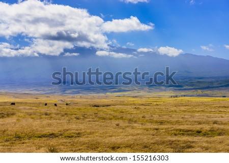 Field at the foot of Mauna Kea Mountain, Big Island, Hawaii, USA - stock photo