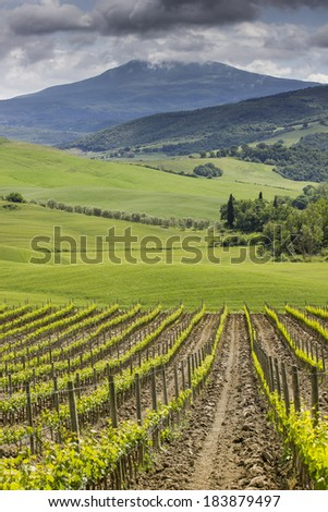 Field before harvest, which is situated in mountains. - stock photo