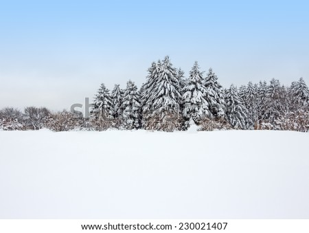 Field covered by snow and calm winter forest after the snowstorm. - stock photo