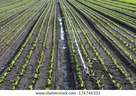 Field crops and irrigation system. - stock photo