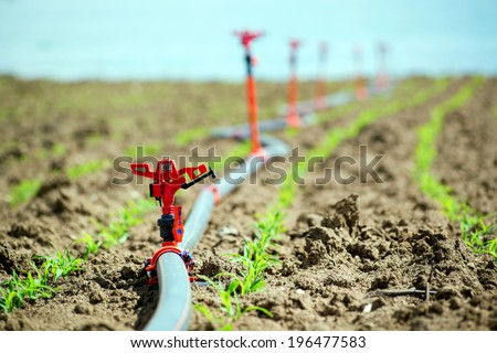 Field crops and irrigation system.. Agricultural irrigation equipment - stock photo