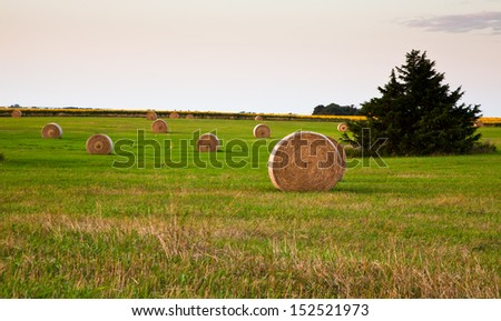 Field dotted with hay rolls - stock photo