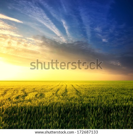 Field during sunset. Agricultural landscape - stock photo
