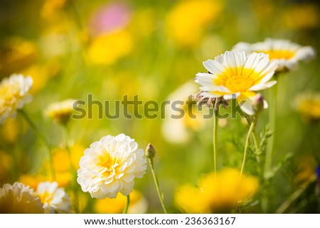 field flowers - stock photo