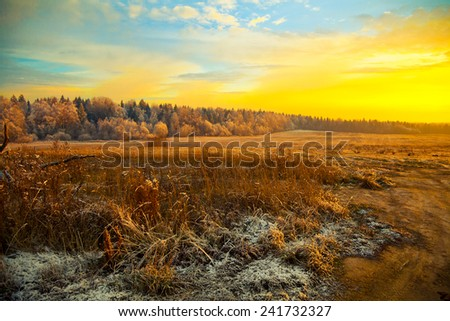Field, forest, dry grass - beautiful landscape at sunset - stock photo