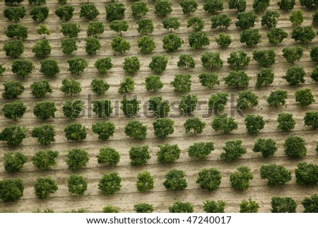 field from above - stock photo