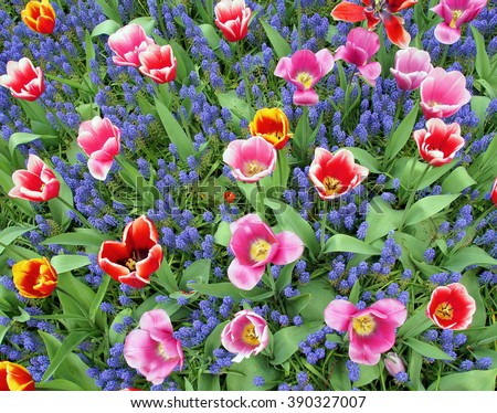 field full of colorful flowers  - stock photo