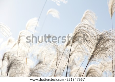 Field Grass Blowing in the Wind - stock photo