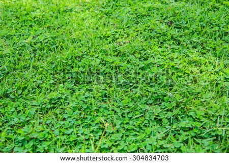 Field grass green, natural backdrop for relaxation. - stock photo