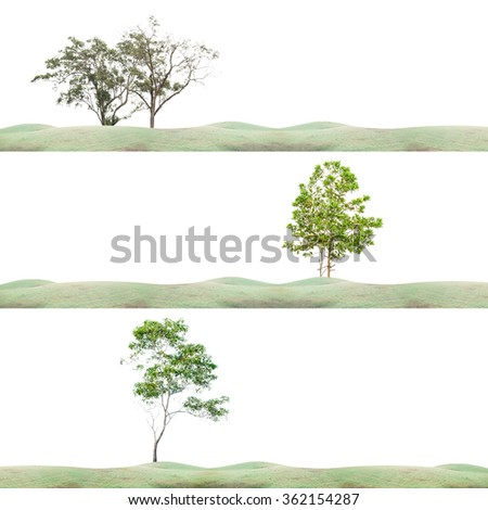 Field grass in the morning,and green tree - stock photo