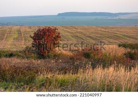 Field in autumn - stock photo