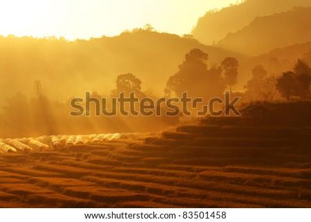 field in morning - stock photo