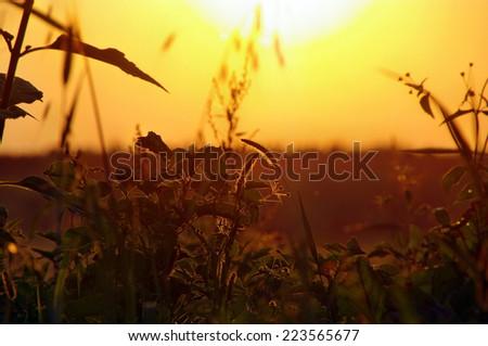 Field in the dark decline color - stock photo