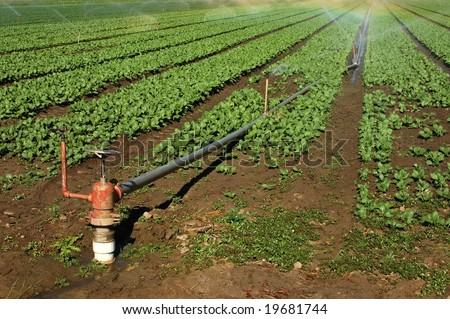 Field irrigation sprinklers; Redlands, California - stock photo