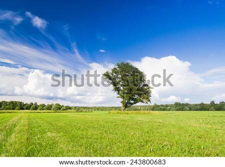 Field Landscape Grass Land  - stock photo