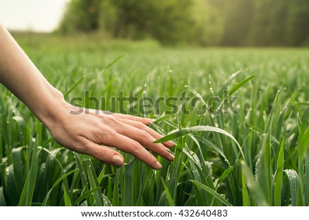 Field, nature with hand or palm. Rural agriculture. Growth of green cultivated plant in summer, spring on the farm. Food industry. Outdoor scene with land, sky. Season of farming. - stock photo