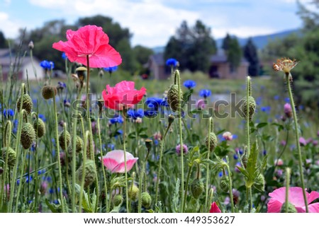 Field of Blooming Wildflowers - stock photo
