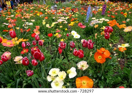 Field of colorful spring flowers in the city park - stock photo